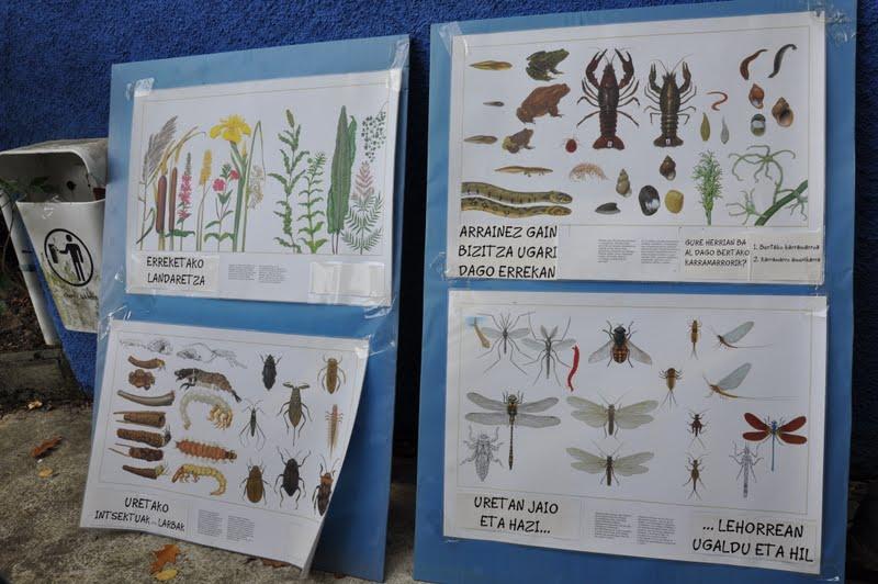 Ibai-ekosistema Lehen Hezkuntza