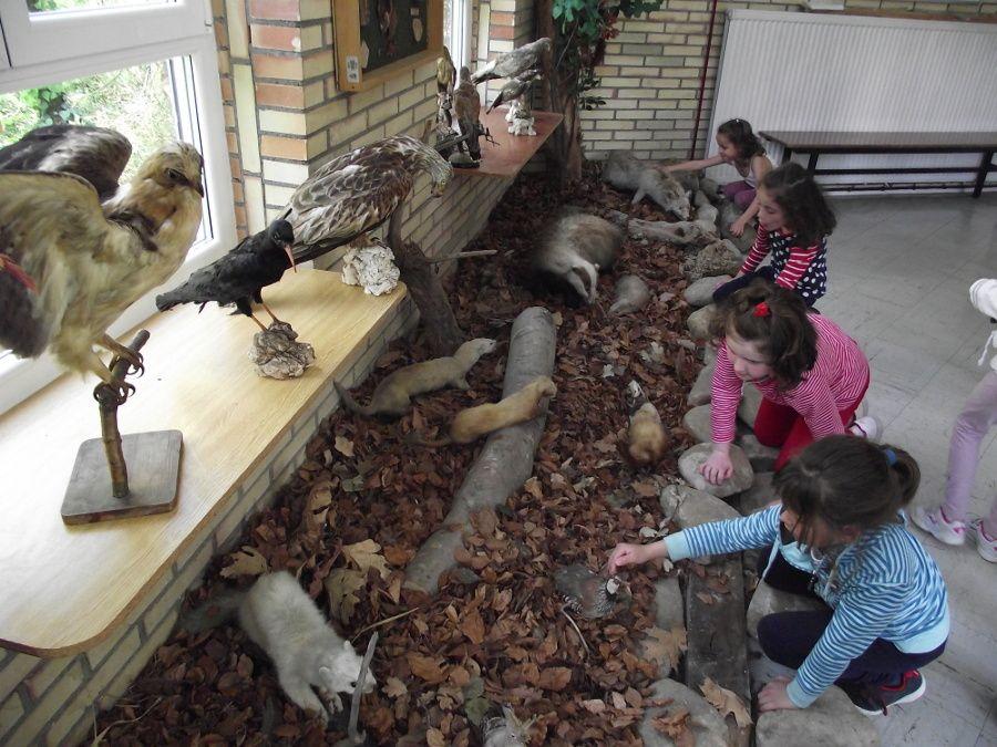 Animalien gaia lantzen Lehen Hezkuntza