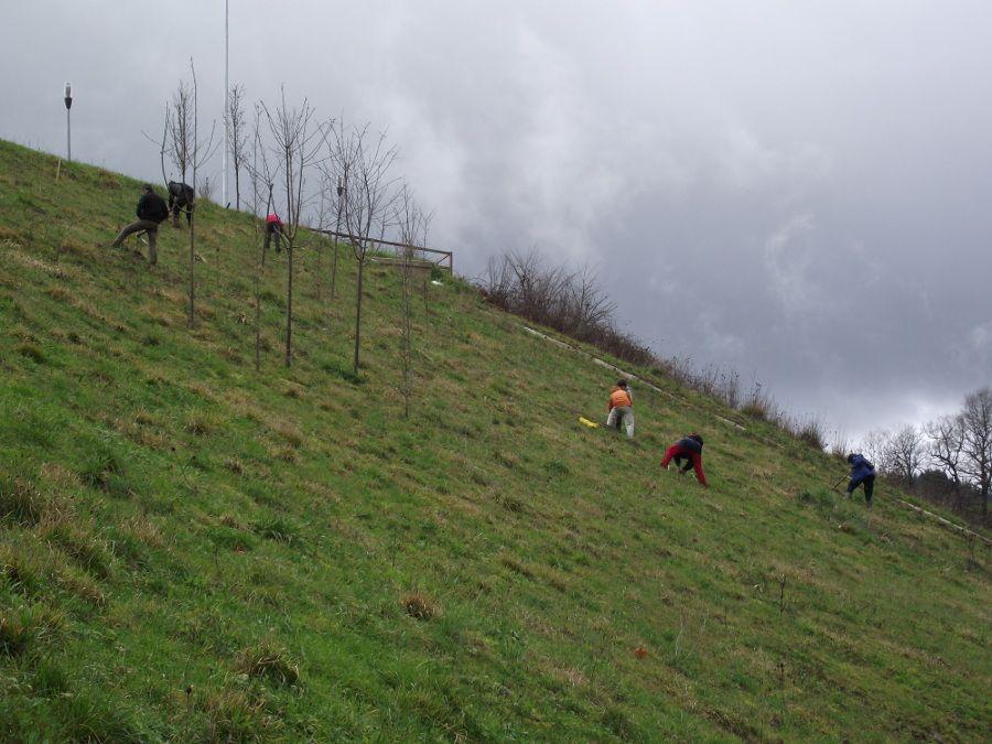 Zuhaitz Eguna 2011